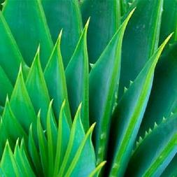 Aloe Vera Gel Pure Organic THE ONLY After-Microdermabrasion