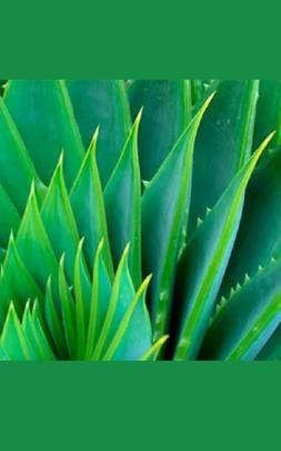 Aloe Vera Gel Pure Organic, THE ONLY After-Microdermabrasion